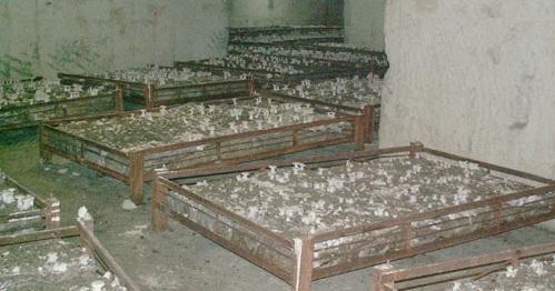 Cave champignonnière